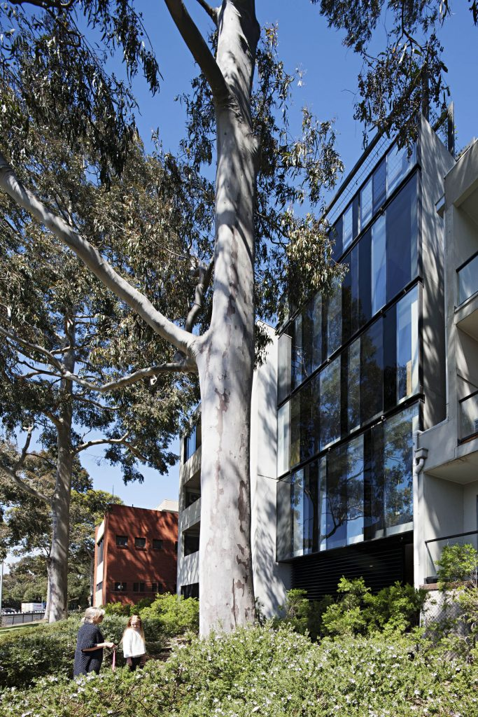 Broad, Foliage Height Windows Are Dappled By The Neighbouring Eucalypts Whilst Providing Another Form Of Passive Resourcing By Absorb
